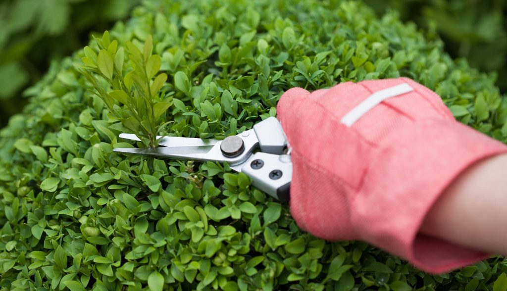 Basic Gardening Tools And Equipment You Will Need